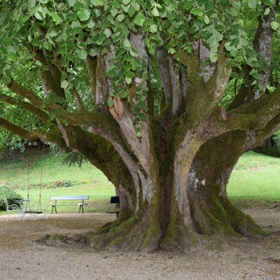 arbre_salvanet_SPT